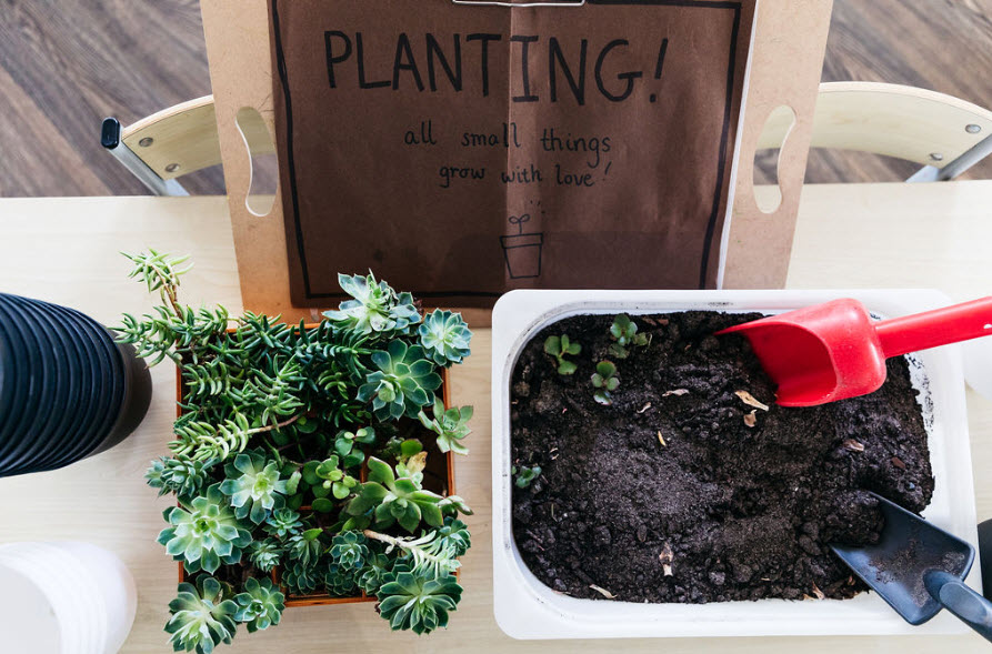 Our Petit Richmond centre develops sustainable practices by planting succulents as a play-based learning activity