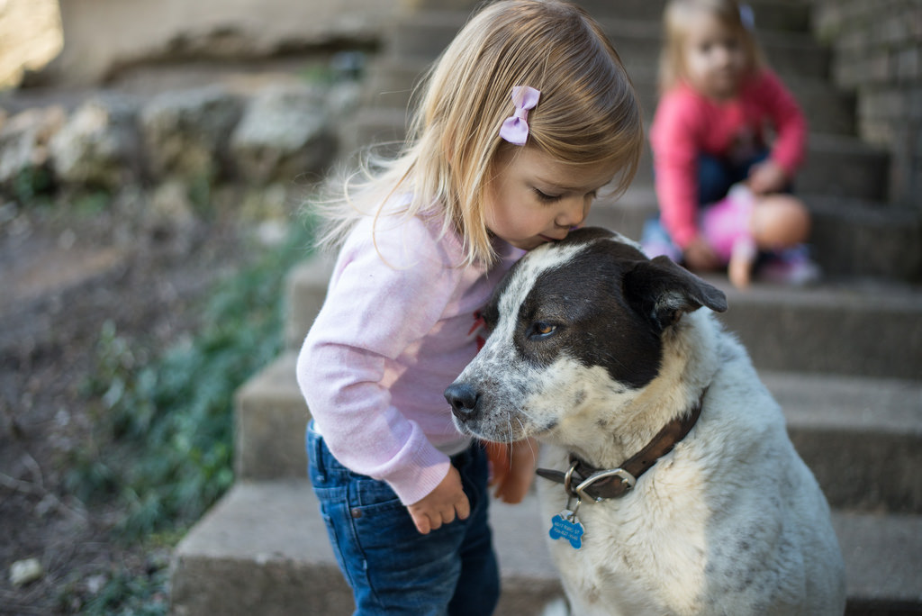 cats and dogs for kids