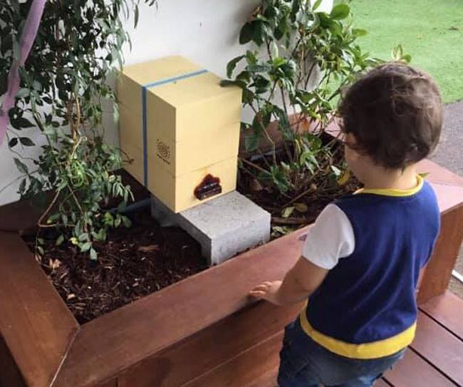 Passion projects like this native bee colony at Burleigh inspire and promote engagement